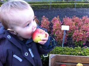 tag en bid af æblet